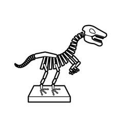 museum dinosaur skeleton icon vector image