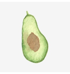 Watercolor or aquarelle half of avocado vector image