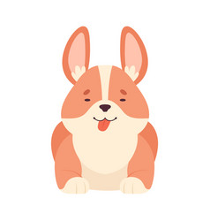 Welsh corgi with short legs and brown coat in vector