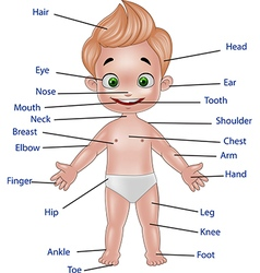 Cartoon of human body vector