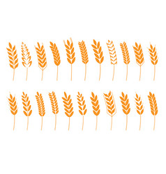 Grain cereal spike icon shape vector