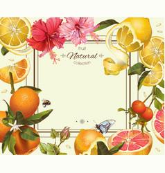 Vintage citrus frame vector