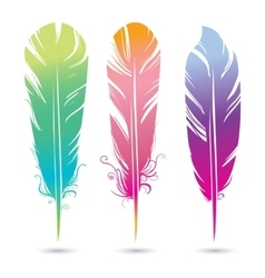 color bright decorative feathers of birds vector image