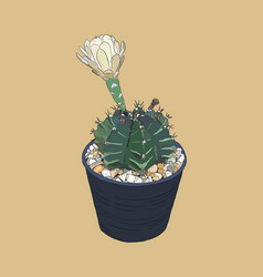 indoor plants in pots sketch vector image vector image