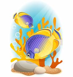 angelfish vector image