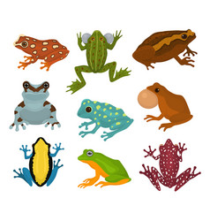 Frog froggy character and cartoon amphibian vector