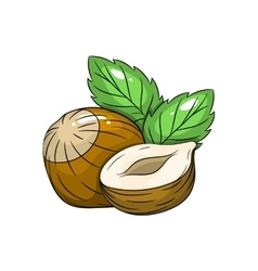 hazelnut on white background vector image