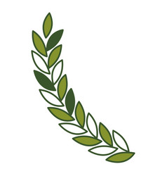 Olive branch closeup in green color vector