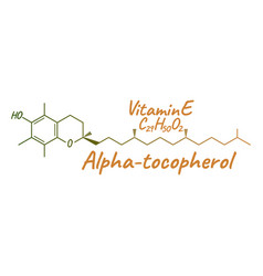 vitamin e alpha tocopherol label and icon vector image