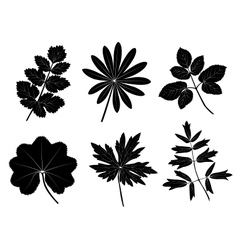 Grass leaves vector image