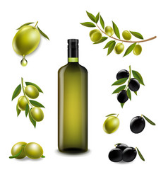 big set with branch olives and with virgin olive vector image