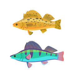 fish yellow blue zebras set vector image