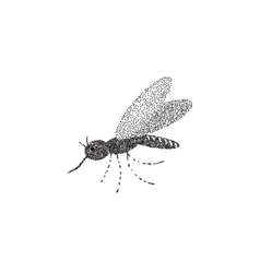 Mosquito on the isolated background Hand drawing vector