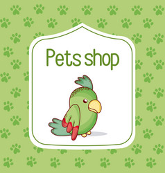 Parrot pet shop cartoon vector