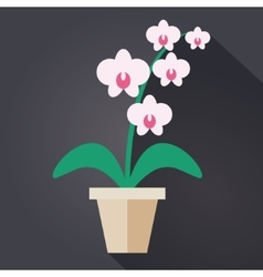 Flat style Houseplant Orchid vector image