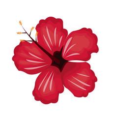 hibiscus flower exotic nature vector image