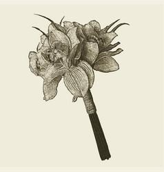 Hand drawn retro flowers bouquet vector