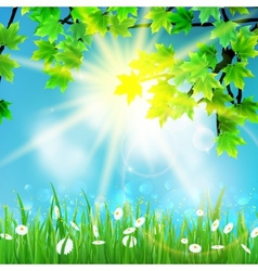 Summer background with sky and grass vector image