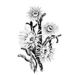Summer garden flowers hand drawn vector image