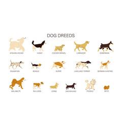 Dog breeds set vector
