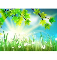 Green background with maple leaf and grass vector