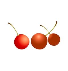 Icon cherry vector