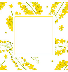 Cassia fistula - golden shower flower banner card vector