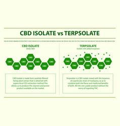 cbd isolate vs terpsolate horizontal infographic vector image