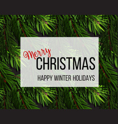 christmas tree fir branches background vector image