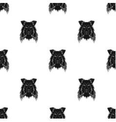 Dog collie breed scottish shepherd muzzle vector