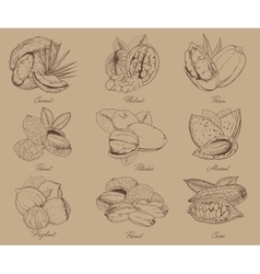 Engraved nuts isolated set mixed nuts vector