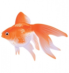 goldfish veil tail vector image