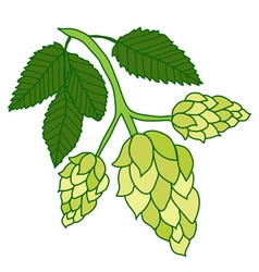 Hops plant isolated on white background vector