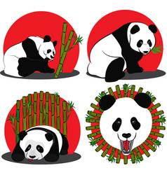set of images of panda - a bamboo bear vector image