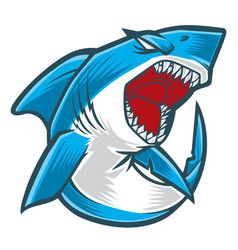 shark angry blue vector image