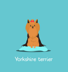 An depicting a cute yorkshire terrier vector
