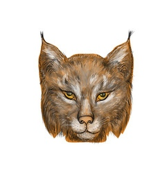 Lynx on white vector image vector image