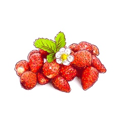 Wild strawberry with flower Sketch with watercolor vector image vector image