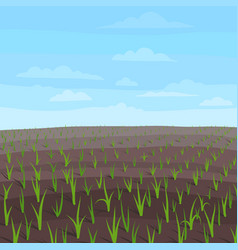 Agricultural field landscape growing young wheat vector