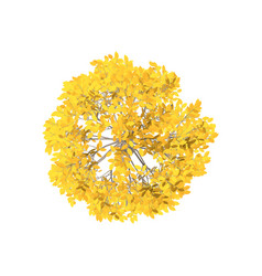 Aspen tree isolated on white background top view vector