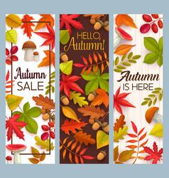 hello autumn and fall seasonal sale banners vector image