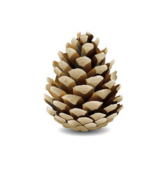 pine cone on white background vector image