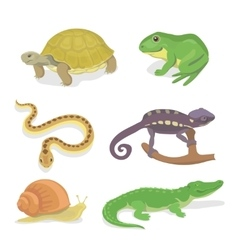 Reptiles and amphibians decorative set of vector