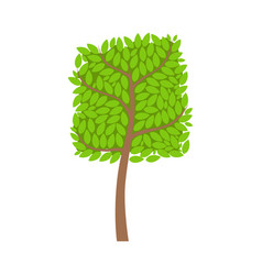 tree with a square crown and green leaves element vector image vector image
