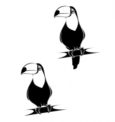 funny toucan vector image