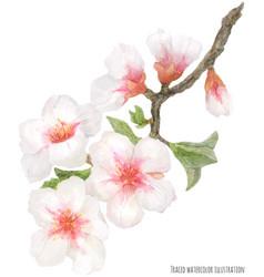 Flowering almond branch vector