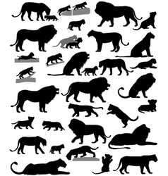 silhouettes of lions and lion cubs vector image vector image