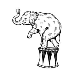 circus elephant engraving vector image