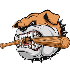 a fierce bulldog vector image
