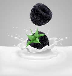 Blackberries with milk vector image